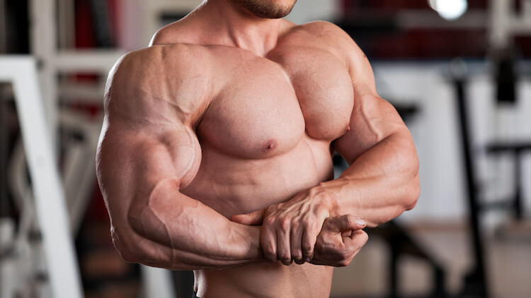 muscles-anabolic