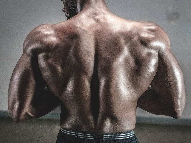 muscles-back