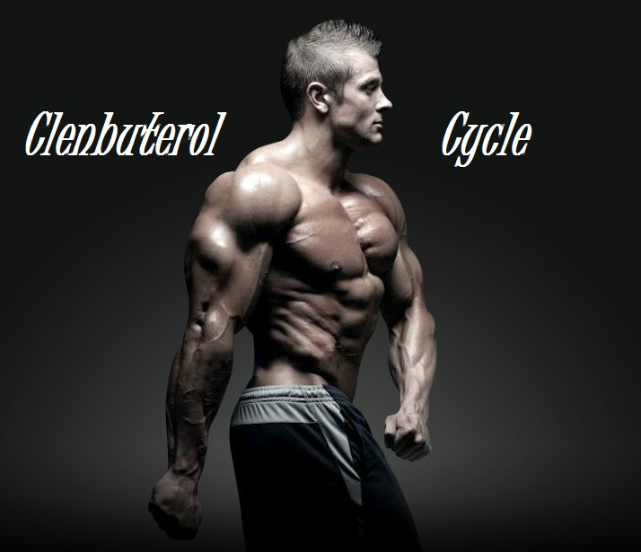 clenbuterol-cycle