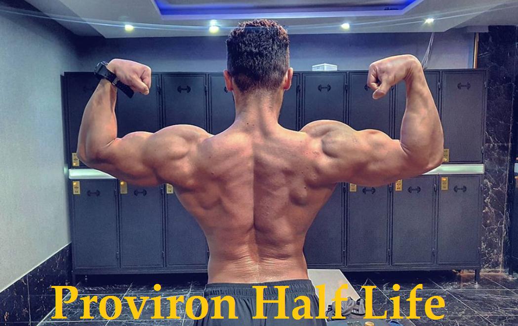 Proviron-Half-Life